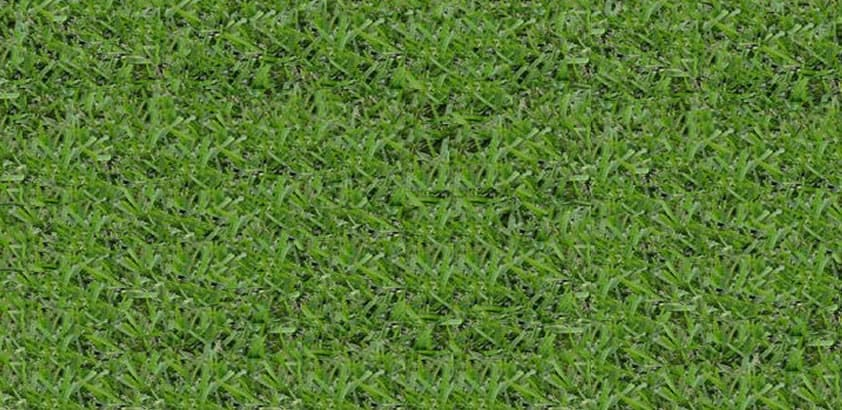 Floratam St Augustine King Ranch FL Turfgrass
