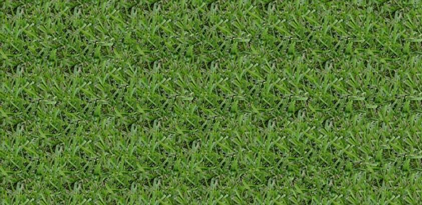 Palmetto St Augustine King Ranch FL Turfgrass