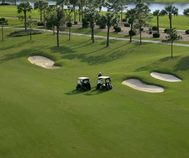 King Ranch Florida Turfgrass Golf Course Turfgrass