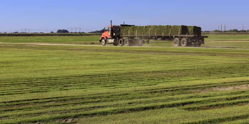 What's New at King Ranch Turfgrass